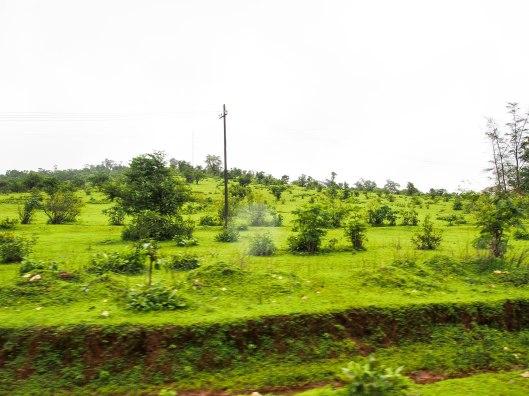 Green Green Everywhere