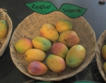 Sindoora - Also known as Sindhu. It is a hybrid of Ratna and Alphonso variety
