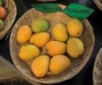 Alphonso - mainly grown in Ratnagiri area of Maharashtra