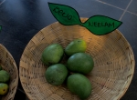 Neelum - Late Season Mango grown in South India